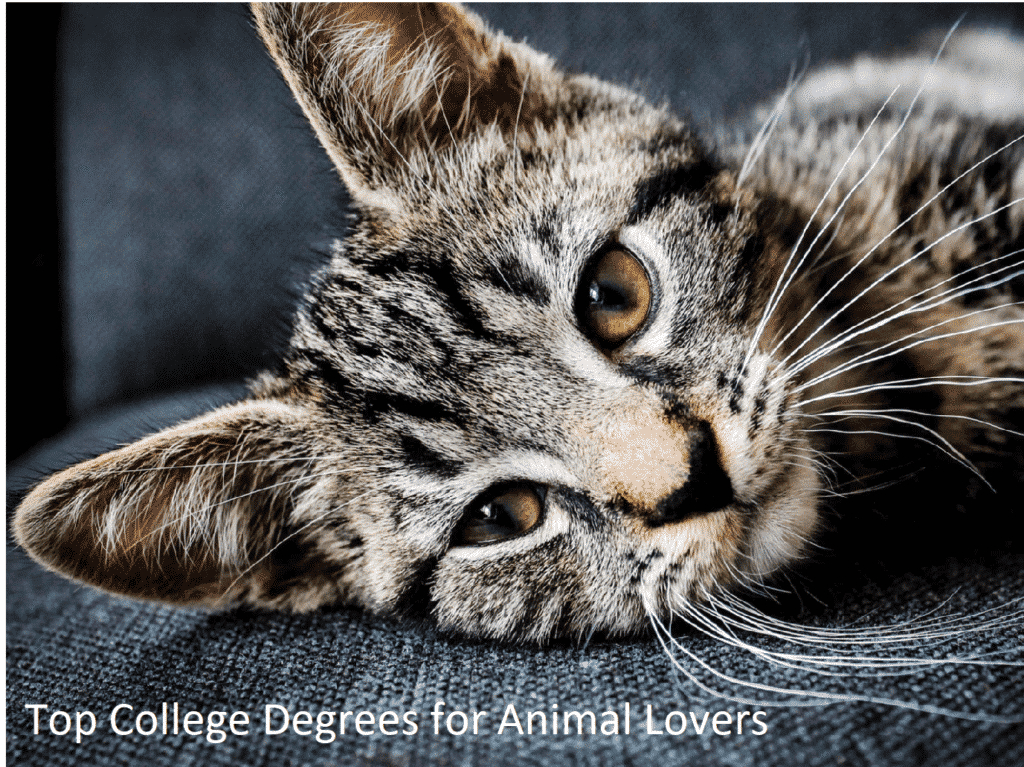 College Degrees for Animal Lovers